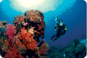 Onderwater Fotografie